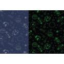 Tissu Jersey phosphorescent Space coloris Marine